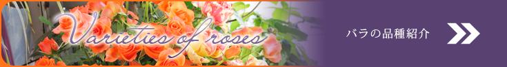 バラの品種紹介