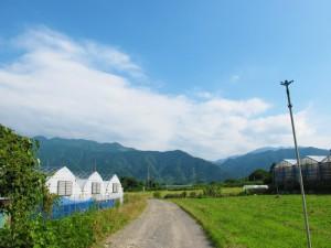 四国霊峰の石鎚山の伏流水で育てています。