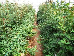 農薬も最低限に抑えて、自然と調和。