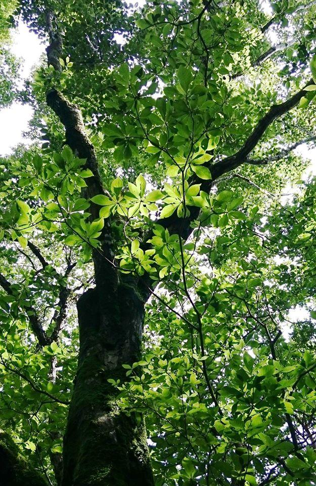 「心地いい風」と 「透過光のきらめき」,久万高原の森歩き