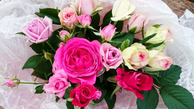 バラの香り バラの優しさ バラの無垢な心