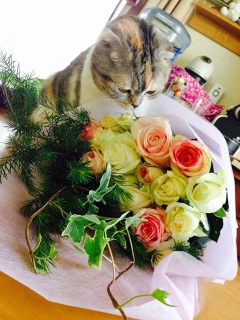 「☆ほしよみアンジェ☆幸せブログ☆」さまでご紹介いただきました。