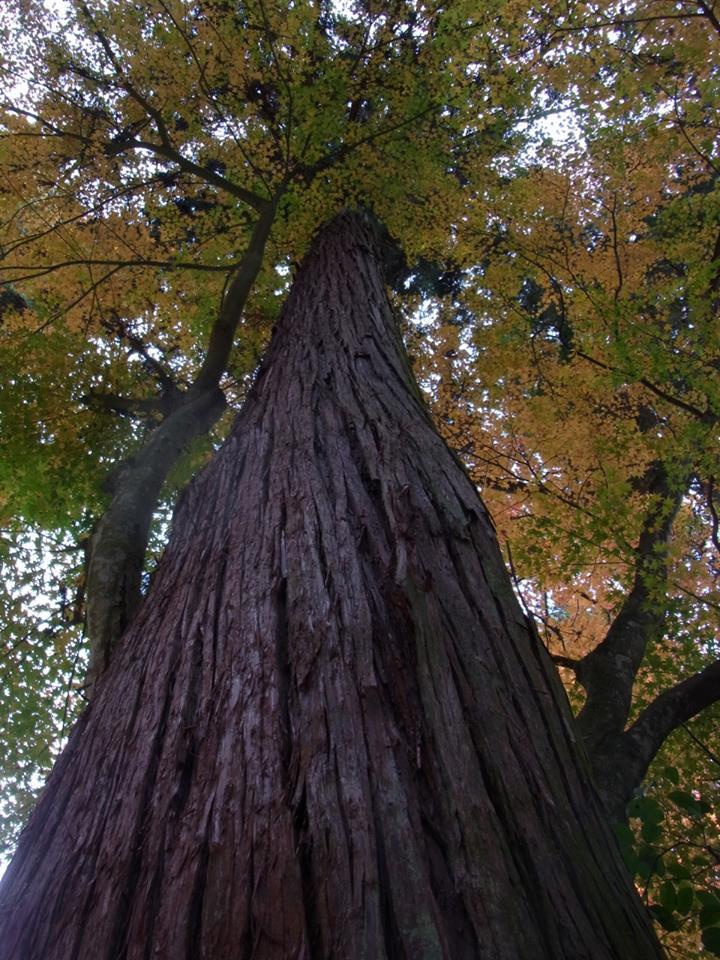 千年の森の鶴見さんのお宅に伺いました