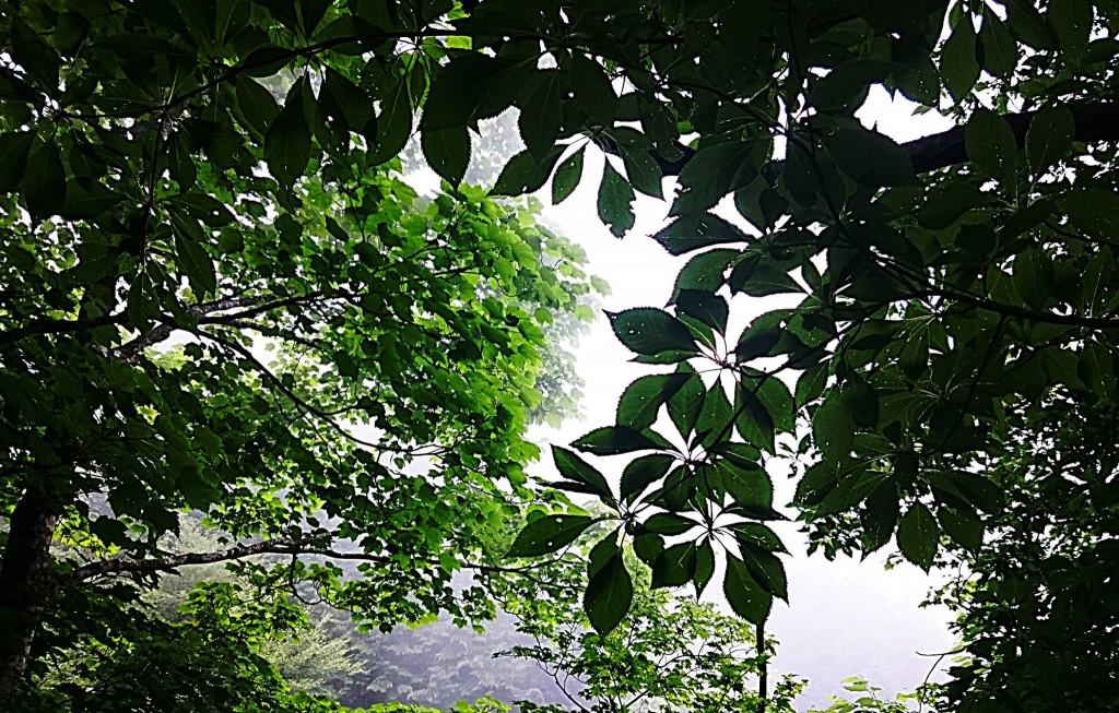 今年も行ってきました。石鎚山お山開き