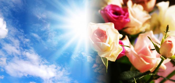 暑い季節でもバラを長く楽しむコツ