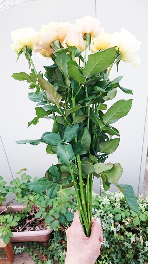 茎が長く、葉が整理されていない状態
