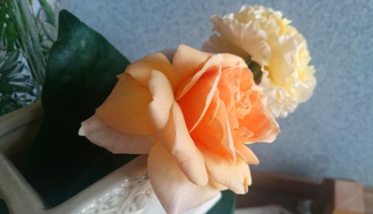 この時、特に水切りはしませんでしたが、僅か30分後には、このように花びらに力が戻ってきています。向こう側のバラの花びらもしっかり立ってきています。(余程元気がない場合は、必ず水切りをしてあげてください)