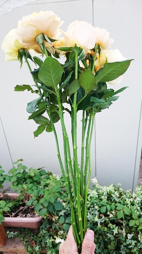 茎を短く、余分な葉を整理。