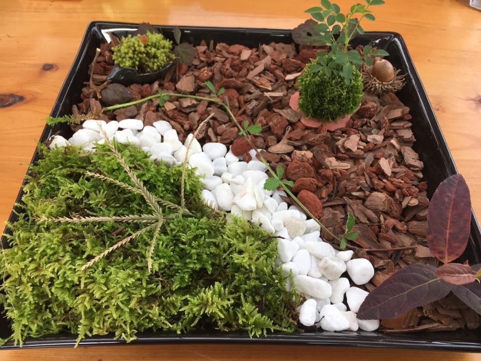 苔玉作りイベント、井上泉さんの記事からです