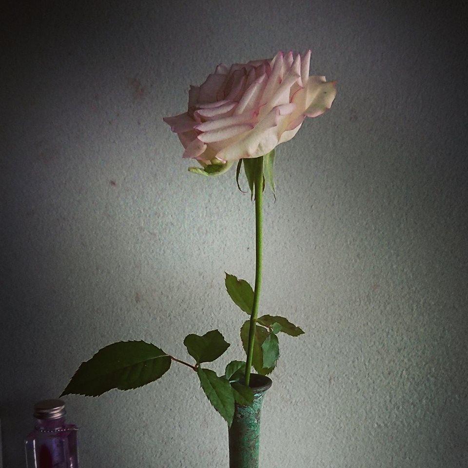 1カ月ぶりに会えたバラ