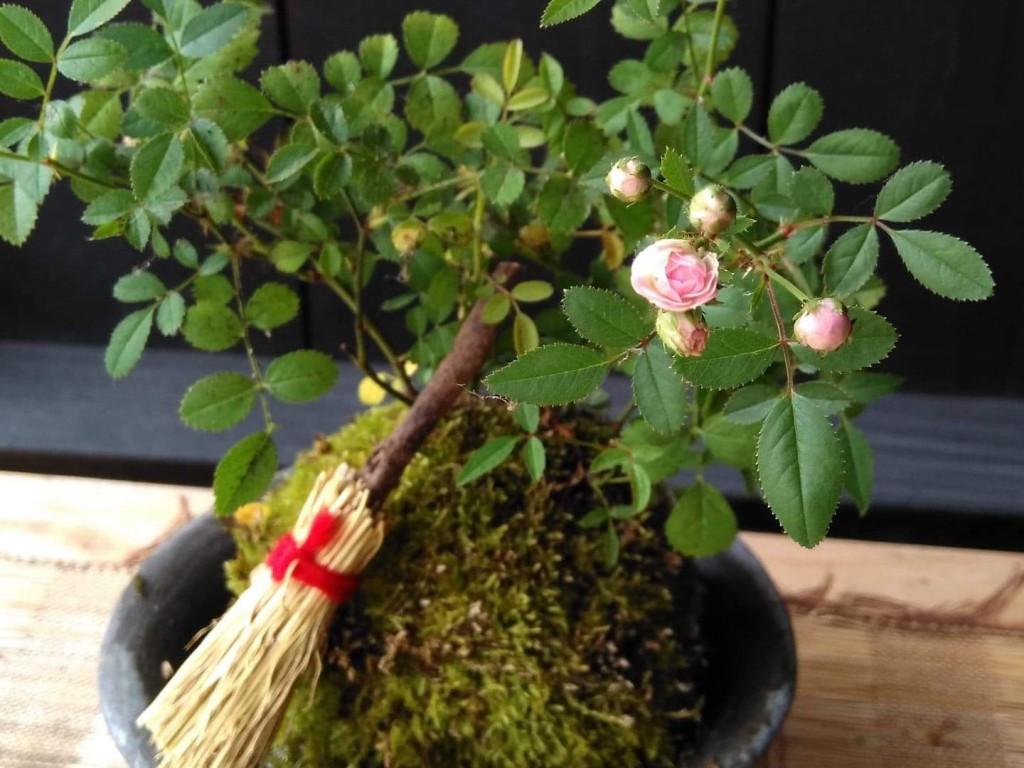 【10/21満席】土、苔、木 ~ バラの苔玉づくりとお抹茶席(第3回)