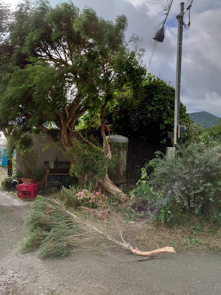 台風一過~ティートゥリー倒木