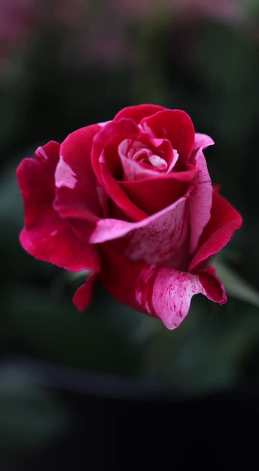 花の役割と感謝…学びの中で
